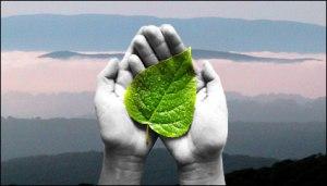 environmental-hands